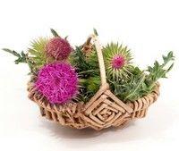 5 plante care-ţi protejează ficatul