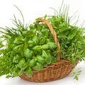 5 plante care favorizează digestia grăsimilor