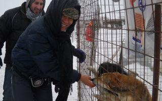 Nadine a dat la lopată pentru câinii comunitari