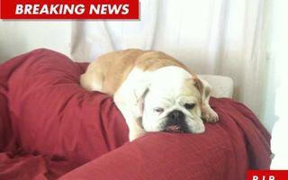 Familia Osbourne a rămas fără câine