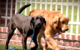 Prietenie emoționantă: Un câine ajută un patruped orb