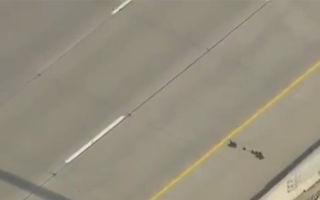 Aventura vieţii: o raţă şi bobocii ei trec o autostradă cu 6 benzi