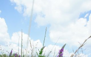 Consultaţii gratuite pentru depistarea afecţiunilor alergice