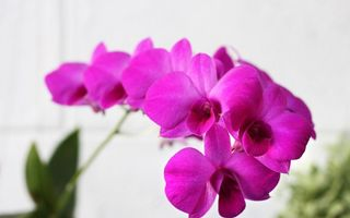 Horoscopul florilor: Ce plantă reprezintă zodia ta şi ce spune despre tine