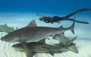 Frumoasa şi bestia, o poveste modernă: Fata care înoată cu rechinii