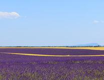 Lavanda, parfum de Provence