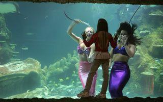 Dosar Eva. Jocul sirenelor: Povestea unui spectacol senzațional