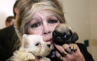 Brigitte Bardot vrea să salveze de la moarte un câine care a desfigurat o fetiță