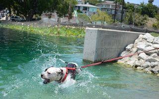 """Câine de luptă, găsit mort în Parcul Tei. ASPA: """"Cadavrele câinilor, plantate de ONG-uri"""""""