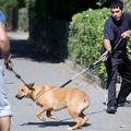 Curtea Constituţională: Câinii maidanezi pot fi eutanasiaţi