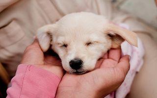 Radu Beligan, Dan Amariei şi Andreea Raicu încurajează adopţiile de câini