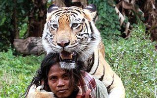 Mulan, fiara cu suflet cald: Povestea uimitoare a prieteniei dintre un bărbat și un tigru