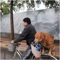 VIDEO: Cel mai deștept câine din lume