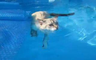 VIDEO: O pisică înoată în piscină