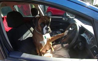 VIDEO: Ce face un câine plictisit care îşi aşteaptă stăpânii