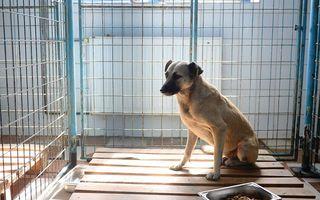 O femeie ucisă de câini, într-un parc din Capitală. 7 câini au fost luaţi din zona incidentului