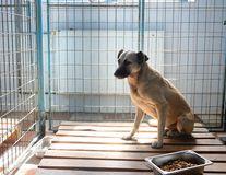 Femeia fără adăpost era în viaţă când a fost atacată de câini. Ce spun anchetatorii despre cauza morţii