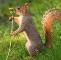 VIDEO: Veverița jucăușă