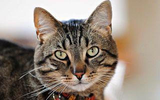 VIDEO: Cum bea apă o pisică direct de la dozator