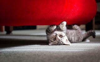 VIDEO: Cea mai simpatică pisicuță din lume