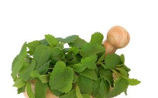 5 plante antistres care-ţi apără corpul de inflamaţii şi boli