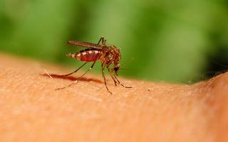 5 motive pentru care atragi ţânţarii. Cum scapi de ei?