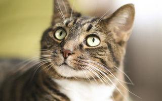 VIDEO: Cel mai bun loc pentru o pisicuță curioasă