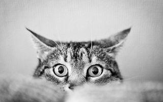 VIDEO: Pisica speriată își ia zborul