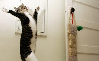 VIDEO: Pisica ratează săritura