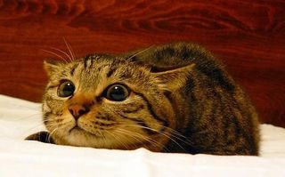 VIDEO: Pisica se uită la un film de groază