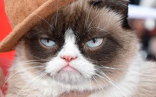 """VIDEO: Pisica """"morocănoasă"""", celebră pe internet, o face bogată pe stăpâna sa"""