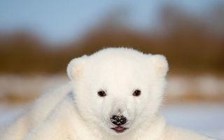 VIDEO: Un pui de urs polar vede pentru prima oară zăpada