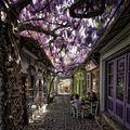 15 străzi magice pline cu flori și copaci din toate colțurile lumii