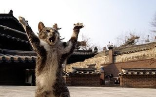 VIDEO: Atacul pisicii ninja