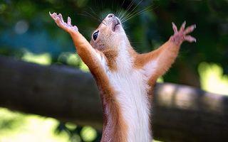VIDEO: Veveriţa îşi face încălzirea