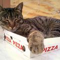 VIDEO: Şi pisicile mănâncă pizza