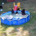 """VIDEO: O ursoaică şi puii ei se """"relaxează"""" în piscina unei familii"""
