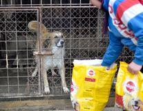 """""""Ajută animalele din adăposturi să-și găsească o familie!"""", o campanie demarată de Mars Romania, pentru al cincilea an consecutiv"""