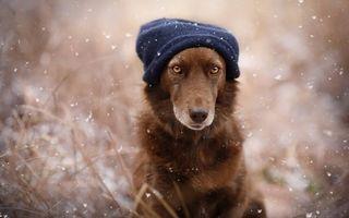 Cei mai buni prieteni: 25 de imagini superbe cu câini