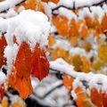 Cum va fi vremea de Crăciun. Prognoza meteo pentru fiecare regiune a ţării