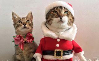 Moş Crăciun are blăniţă: Iarna asta pisicile aduc sacul cu daruri!
