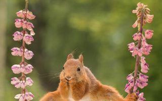 Veveriţa acrobată face şpagatul în timp ce mănâncă! Imaginile spectaculoase care au cucerit internetul