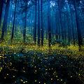 Spectacolul feeric al licuricilor: 10 imagini fantastice!