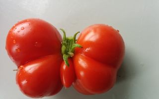 Cele mai ciudate forme posibile ale fructelor şi legumelor. 20 de imagini incredibile