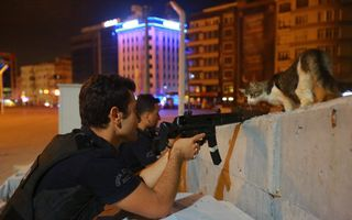 Lovitura de stat din Turcia: Poza unei pisici a devenit virală pe internet