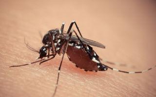 Alertă: Al treilea caz de infecţie cu virusul Zika a fost confirmat în România