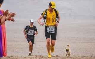 Dragoste la prima vedere. Cățelul care a alergat 160 de km alături de un maratonist