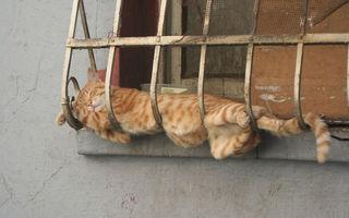 20 de imagini amuzante care demonstrează că pisicile pot dormi absolut oriunde