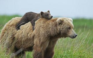 Şcoala lui Martinel: Cum învaţă ursuleţii să se descurce în viaţă - FOTO