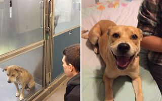 15 imagini cu animale chinuite care au fost salvate. Ochii lor spun tot!